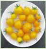 Floragold Basket