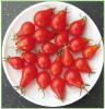 Red Dwarf Romanian